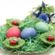 Easter eggs in the Easter grass — Stock Photo