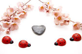 Wooden beetle with heart stone — Stock Photo