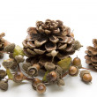 Pine plugs with acorn wreath — Stock Photo