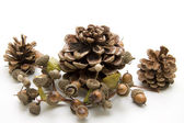Pine plugs with acorn wreath — Stock Photo
