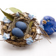 Bird nest with bird — Stock Photo