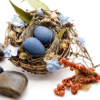Bird nest with stones — Stock Photo