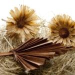 Straw flower with fields — Stock Photo #17174239