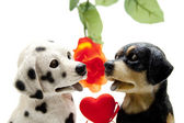 Dog pair with heart — Stock Photo