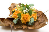 Roses with autumn foliage — Stock Photo