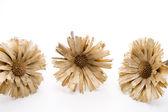 Dry straw flowers — Stock Photo