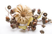 Straw flower with acorns — Stock Photo
