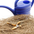Hay nest with cigarettes - Stock Photo