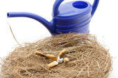 Hay nest with cigarettes — Stock Photo