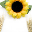 Stock Photo: Wheat ear with sunflower