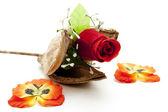Rudá růže — Stock fotografie