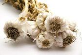 Fresh garlic — Stock Photo