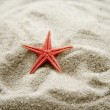 Stock Photo: Red sestar in sand