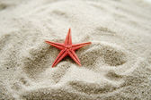 Red sea star in the sand — Stock Photo