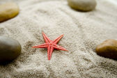 Sea star in the sand — Stockfoto