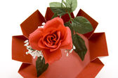 Red rose with leaves — Stock Photo