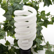 Light bulb with ivy plant — Stok fotoğraf