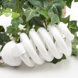 Light bulb with ivy plant — Stock fotografie