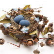 Bird nest with eggs and acorns — Stock Photo