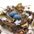 Bird nest with eggs and acorns — Stock Photo #19356863