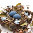 Stock Photo: Bird nest with eggs and acorns