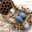 Bird nest with eggs — Stock Photo #19356873