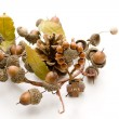 Acorns with wooden cross — Stock Photo