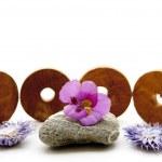 Steine mit Blüte — Stockfoto