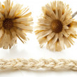 Plait cord with straw flower — Stock Photo #19460097