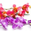 Orchid with blossoms — Stock Photo