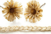 Plait cord with straw flower — Stock Photo