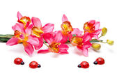 Orchid with wooden beetle — Stock Photo