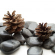 Pine plugs with stones — Stock Photo