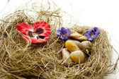 Flower blossom in the hay nest — Stock Photo