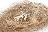 Prank wood in the hay nest — Stock Photo