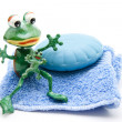Soap with frog - Stock Photo