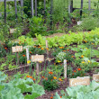 Vegetable garden — Stock Photo #12648238