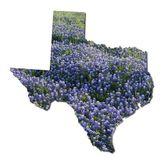 Bluebonnets de Texas — Foto de Stock