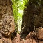 Tropical jungle landscape — Stock Photo