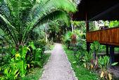 Lodge in jungles — Stock Photo
