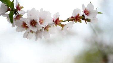 Spring branch — Stock Video