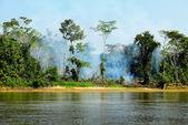 Fogo na selva — Fotografia Stock