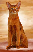Abyssinian cat sorrel color — Stock Photo