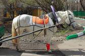 Carrozza con cavalli bianchi in — Foto Stock