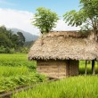 Thatched hut amongst farm crops — Stock Photo