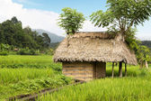 Thatched hut amongst farm crops — Stockfoto