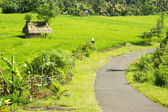 Small thatched huts in the rice field and the road — Stock Photo