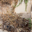 Old broken bicycle near brick wall with texture of ivy — Stock Photo #35196395