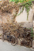 Old broken bicycle near brick wall with texture of ivy — Stock Photo