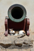 Cannon and cat — Stock Photo